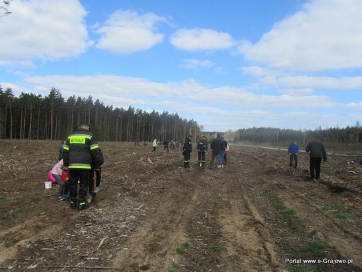 Sadzimy 1000 drzew na minutę
