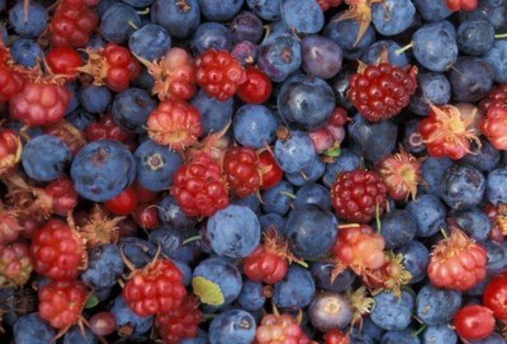 Myjmy owoce leśne