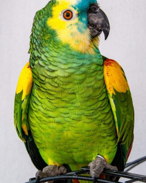 Jak wybrać odpowiedni pokarm dla papug? Podpowiadamy 3 ważne zasady