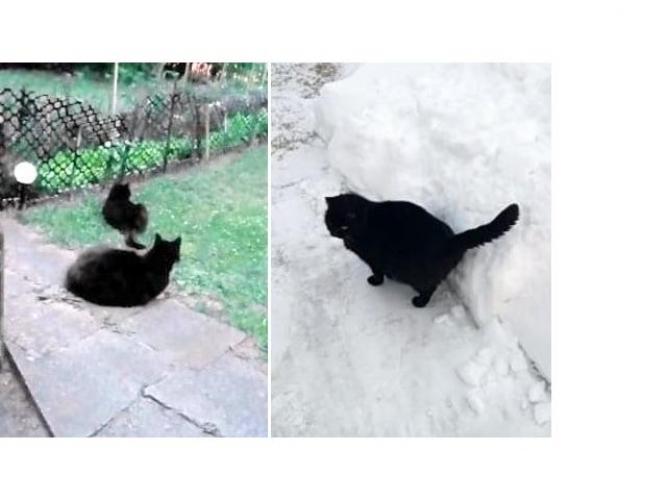 Grajewo ogłoszenia: Poszukuję czarnej, dorosłej kotki, która zniknęła z podwórka...