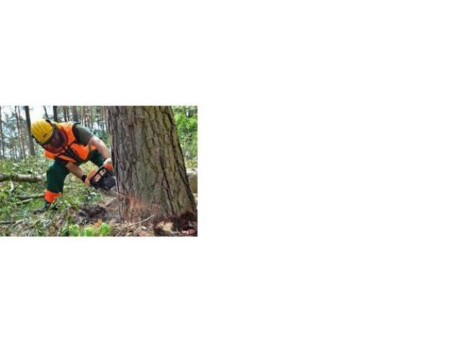 Grajewo ogłoszenia: Zatrudnię pilarza/pomocnika pilarza do pracy w lesie na terenie...