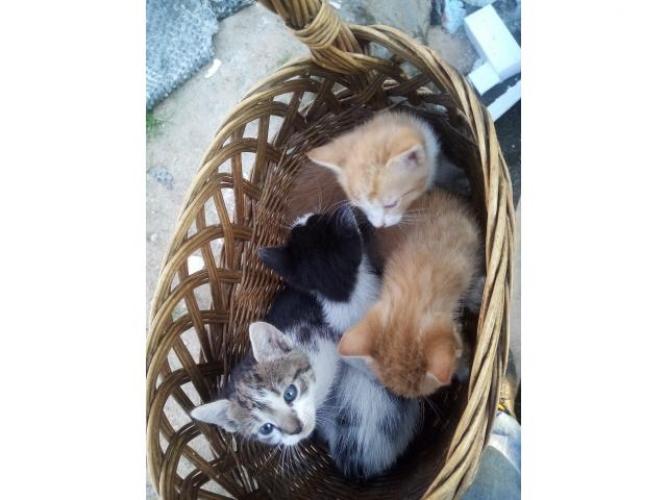 Grajewo ogłoszenia: Oddam 4 koty w dobre ręce
