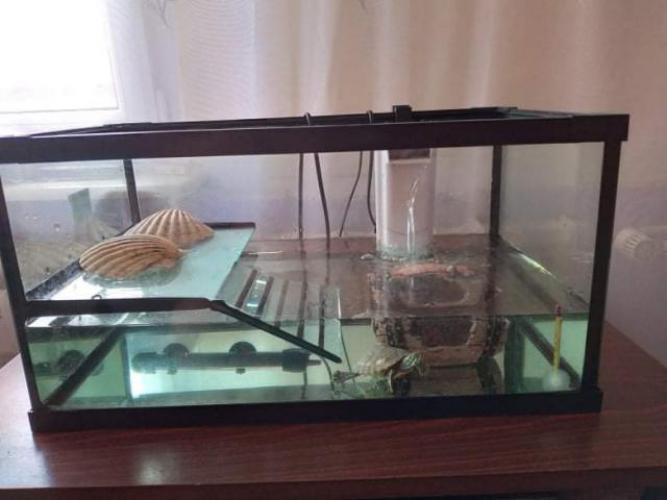 Grajewo ogłoszenia: Sprzedam żółwia wodnego (dwumiesieczny) oraz akwarium