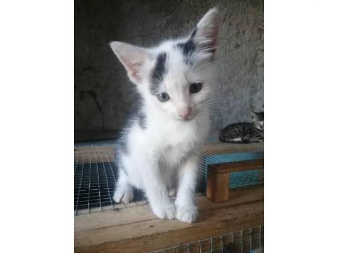 Grajewo ogłoszenia: Kotek szuka nowego domu. Oddam!