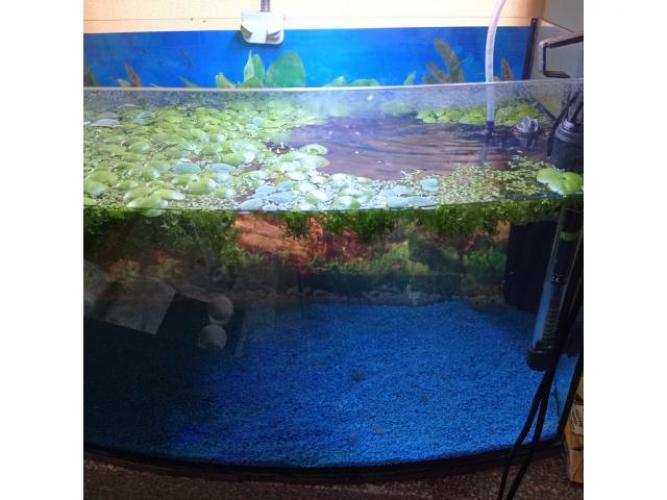 Grajewo ogłoszenia: Sprzedam akwarium panoramiczne szczelne z całym wyposażeniem :...