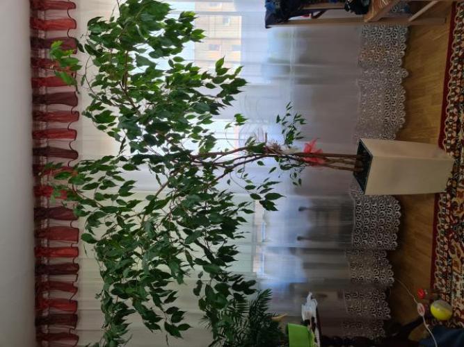 Grajewo ogłoszenia: Oddam za dużą kawę naturalną Tchibo(żółtą) kwiat...