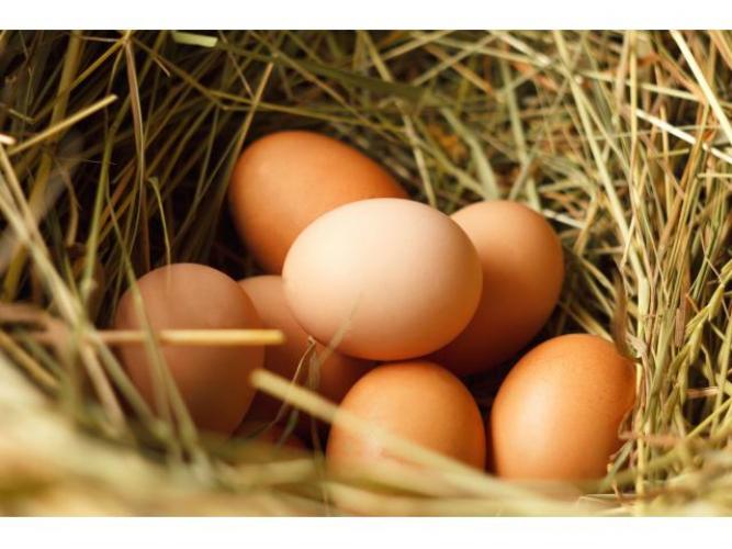 Grajewo ogłoszenia: Sprzedam jaja kurze wiejskie, ekologiczne, wolny wybieg.