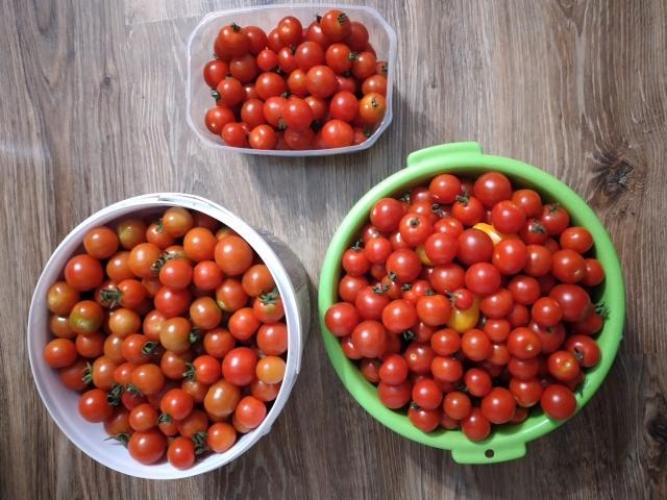 Grajewo ogłoszenia: Sprzedam pomidory koktajlowe ekologiczne z własnej działki