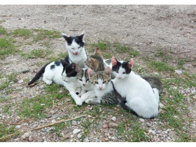 Grajewo ogłoszenia: Oddam kociaki płeć samiec