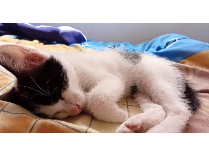 Grajewo ogłoszenia: Zagubił się kotek . Znalazcę proszę o kontakt .