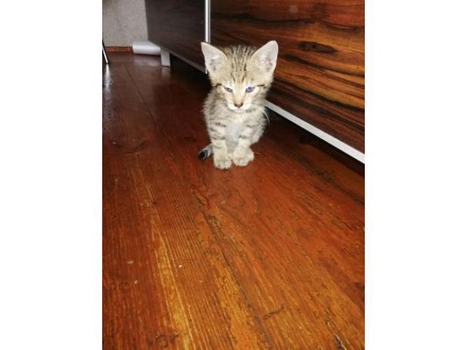 Grajewo ogłoszenia: Witam. Mam do oddania 1 kotka i 2 koty. Niestety jakaś bezduszna...