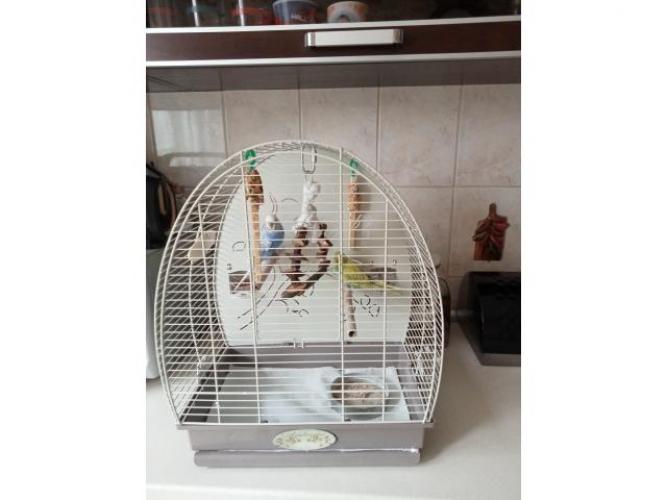 Grajewo ogłoszenia: Sprzedam dwie papugi faliste z całym wyposażeniem. Papugi były...