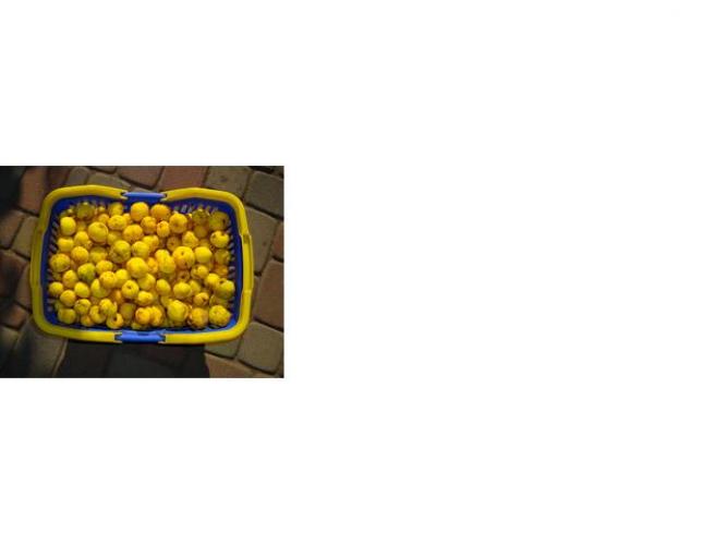 Grajewo ogłoszenia: Sprzedam owoce pigwowca.