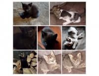 Grajewo ogłoszenia: Do oddania trzy sześciotygodniowe kociaczki