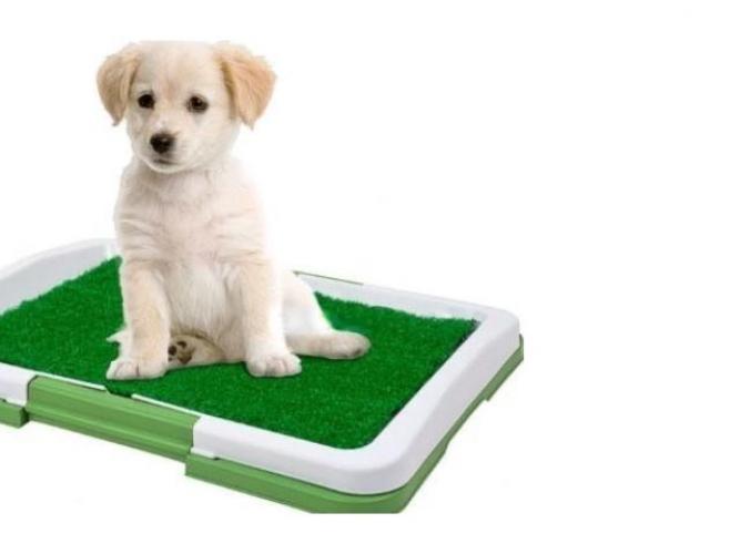 Grajewo ogłoszenia: sprzedam kuwetę dla psa