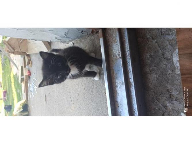 Grajewo ogłoszenia: Oddam małe Kotki w dobre ręce, kotki same jedzą i korzystają z...