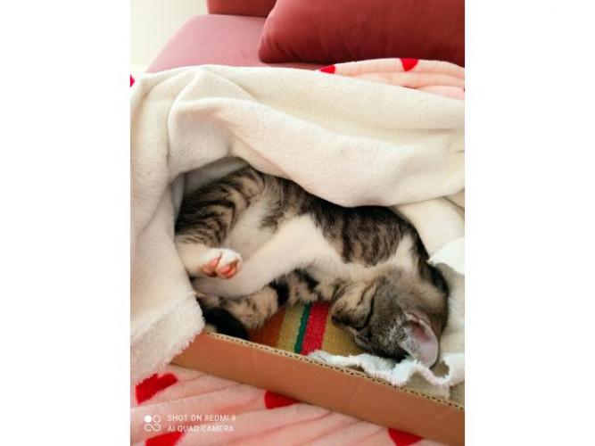 Grajewo ogłoszenia: Szukam dobrego domku dla malej kotki, jest bardzo przywiązana do...