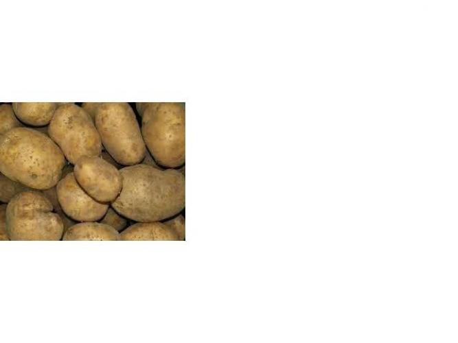 Grajewo ogłoszenia: Sprzedam ziemniaki 150kg odmiany Vineta. Cena 1,00 zł za kilogram....