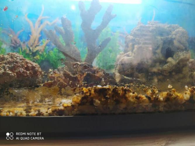 Grajewo ogłoszenia: Witam sprzedam akwarium z całym wyposażenie. Rafa koralowca....