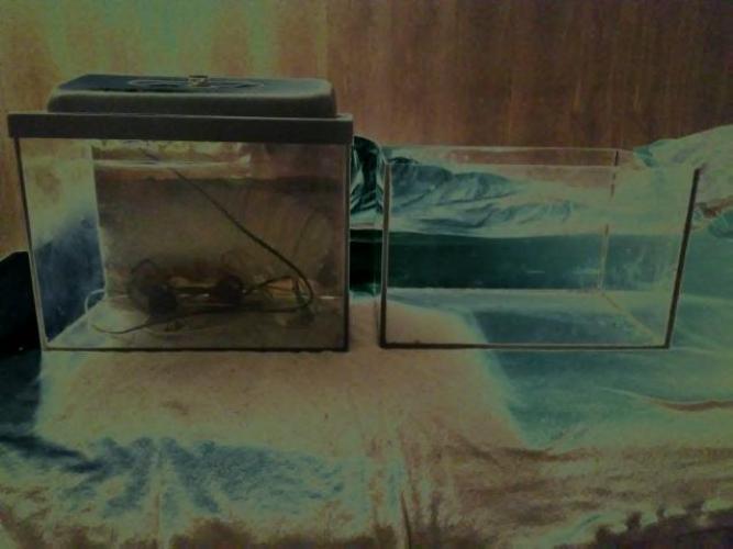 Grajewo ogłoszenia: Posiadam na sprzedaz dwie sztuki akwarium 25l oraz troche ozdob i...