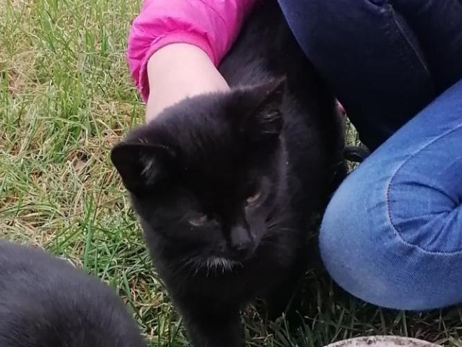 Grajewo ogłoszenia: Śliczna czarnulka kotka szuka dobrego domu. 3miesieczna, uwielbia...