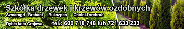 glowna_banner_duzy/6175
